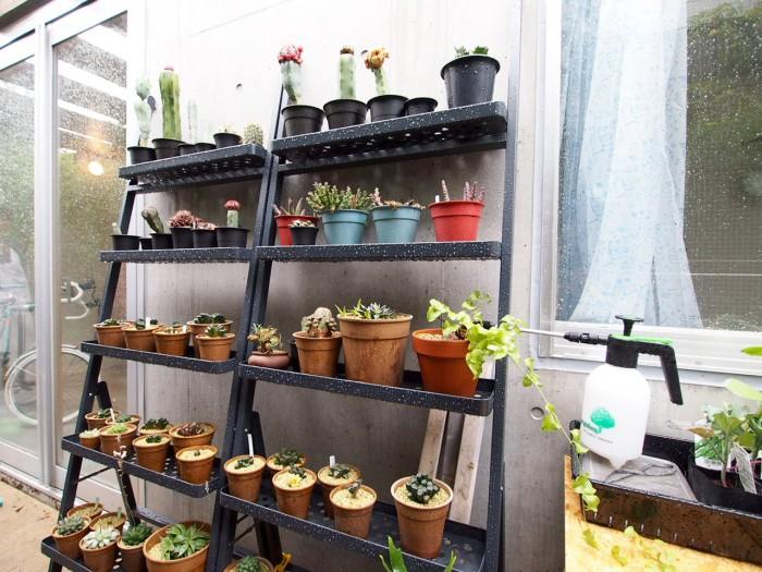 お庭には多肉植物がたくさん。植物にも詳しいご主人の趣味。