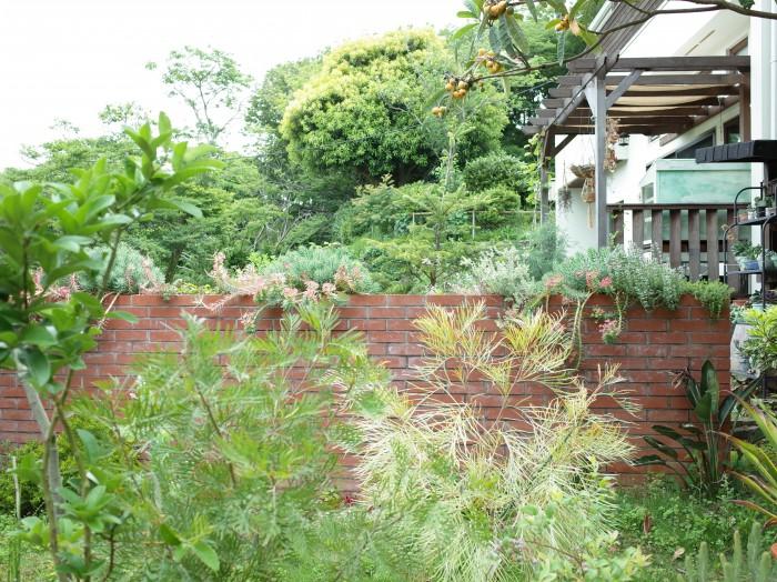 お隣さんの庭と分ける壁も植物をふんだんに使って。