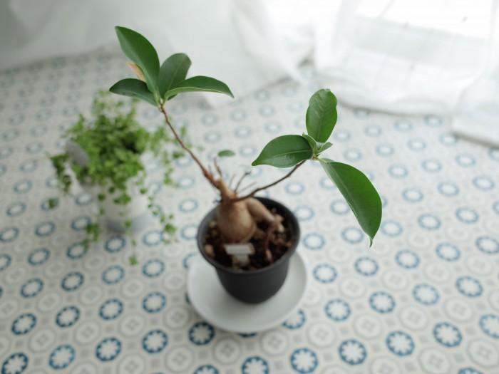 窓際の植物が元気に育っていました